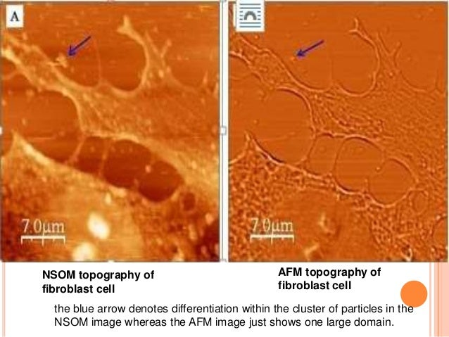 applications of microscopy in biology