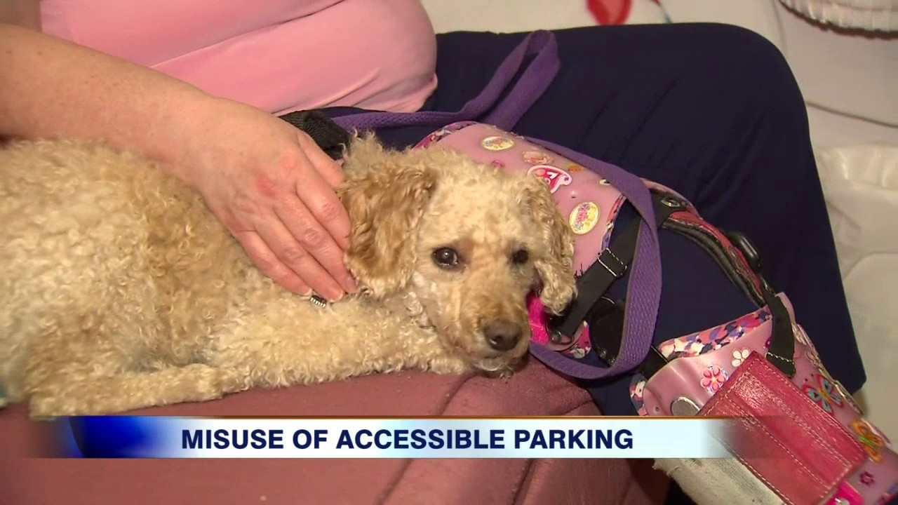 disabled parking permit toronto application